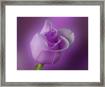Mystical Purple Rose Framed Print by Sandy Keeton