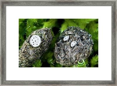 Nail Fungi Framed Print by Nigel Downer