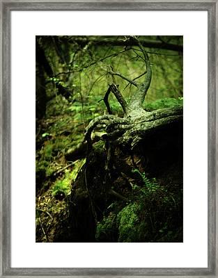 Naked Awakening Framed Print by Rebecca Sherman