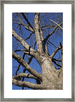 Naked Tree Framed Print by Jonathan Welch