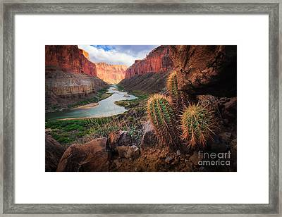 Nankoweap Cactus Framed Print by Inge Johnsson