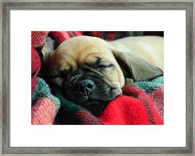 Nap Time Framed Print by Lisa Phillips