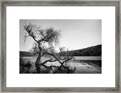 Napa Lake Framed Print by Francesco Emanuele Carucci