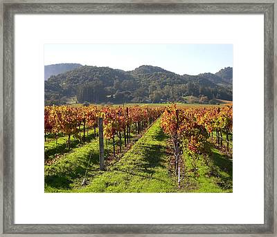 Napa Valley Vineyards Framed Print by Armand Cabrera