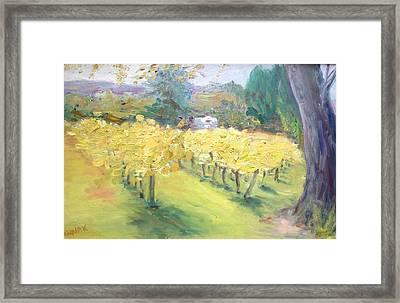 Napa Vineyard Framed Print by Barbara Anna Knauf