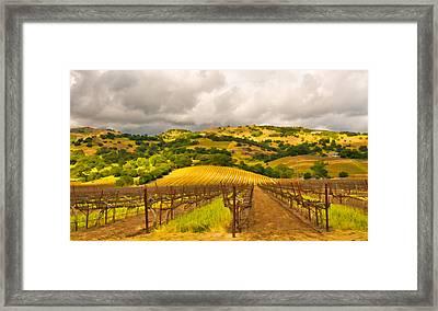 Napa Vineyard Framed Print by Mick Burkey