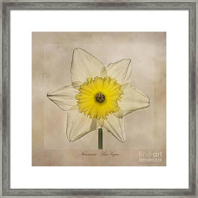 Narcissus Las Vegas Framed Print by John Edwards