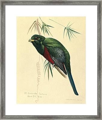 Narina Trogon Framed Print by Louis Agassiz Fuertes