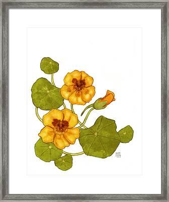 Nasturtium Framed Print by Catherine Noel