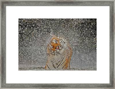 Nat Geo Recognition A?? The Explosion Framed Print by Ashley Vincent