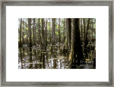 Natchez Trace Wetlands Framed Print by Bob Phillips