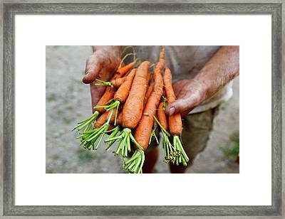 Nate Frigard Holding Carrots Recently Framed Print by Jerry and Marcy Monkman
