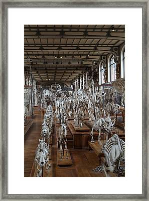 National Museum Of Natural History - Paris France - 01131 Framed Print by DC Photographer