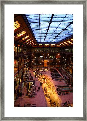 National Museum Of Natural History - Paris France - 011346 Framed Print by DC Photographer