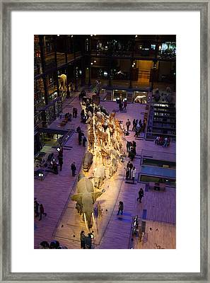 National Museum Of Natural History - Paris France - 011353 Framed Print by DC Photographer