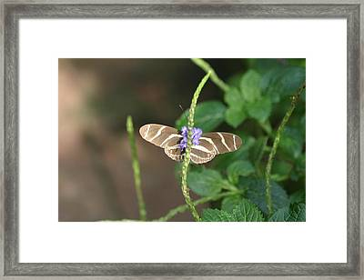 National Zoo - Butterfly - 12122 Framed Print by DC Photographer