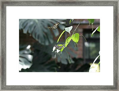 National Zoo - Butterfly - 12123 Framed Print by DC Photographer
