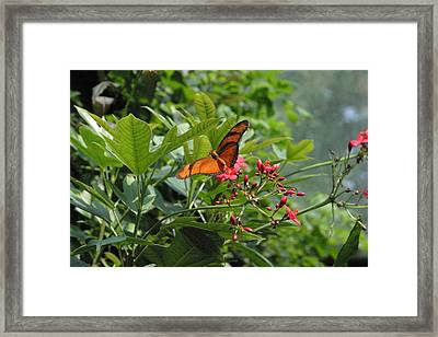 National Zoo - Butterfly - 12126 Framed Print by DC Photographer