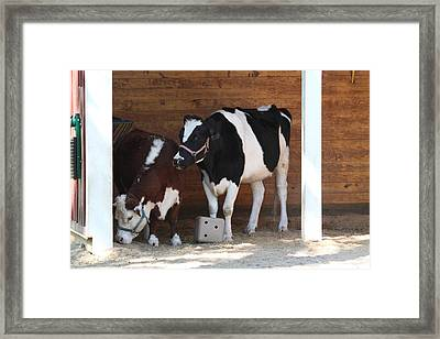 National Zoo - Cow - 01133 Framed Print by DC Photographer