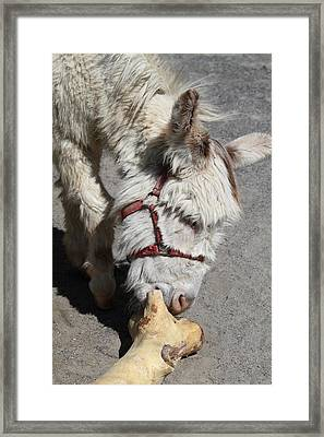 National Zoo - Donkey - 01137 Framed Print by DC Photographer