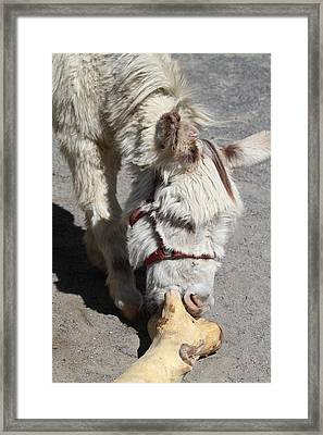 National Zoo - Donkey - 01138 Framed Print by DC Photographer