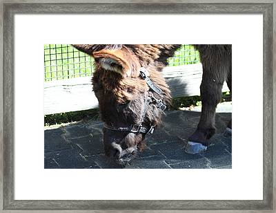 National Zoo - Donkey - 01139 Framed Print by DC Photographer