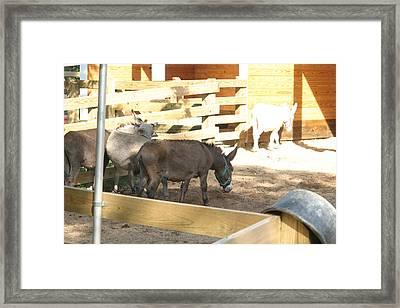 National Zoo - Donkey - 12121 Framed Print by DC Photographer