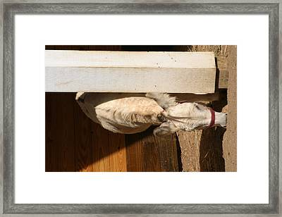 National Zoo - Donkey - 12123 Framed Print by DC Photographer