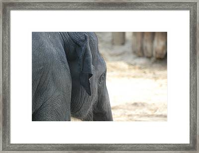 National Zoo - Elephant - 12125 Framed Print by DC Photographer