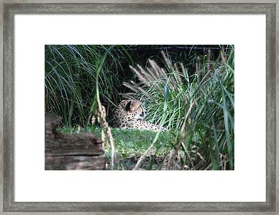 National Zoo - Leopard - 01131 Framed Print by DC Photographer