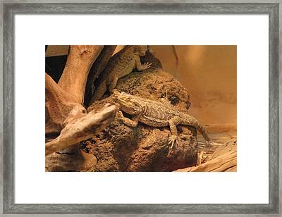 National Zoo - Lizard - 12124 Framed Print by DC Photographer