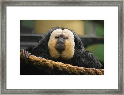 National Zoo - Mammal - 01136 Framed Print by DC Photographer