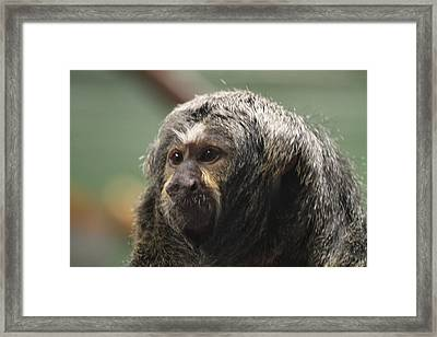 National Zoo - Mammal - 01137 Framed Print by DC Photographer