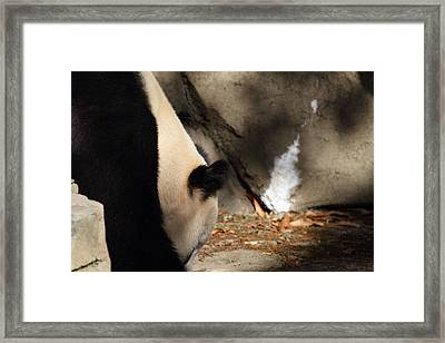 National Zoo - Panda - 011315 Framed Print by DC Photographer