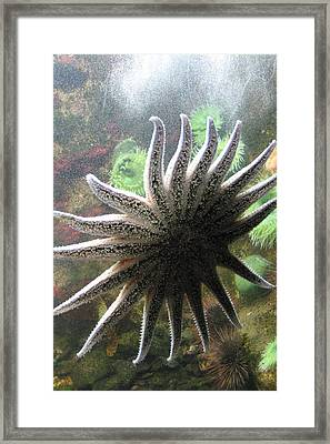 National Zoo - Sea Life - 12125 Framed Print by DC Photographer