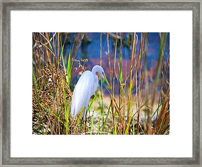 Natural Beauty Framed Print by Adele Moscaritolo