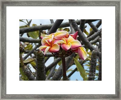Natural Bouquet  Framed Print by Mindy Sue Werth