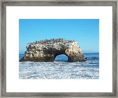 Natural Bridges State Beach Framed Print by Georgia Fowler