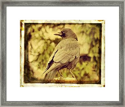 Natural Crow Framed Print by Gothicolors Donna Snyder