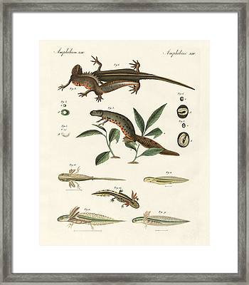 Natural History Of Sea Salamander Framed Print by Splendid Art Prints