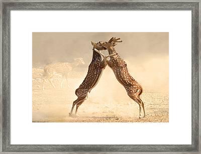 Natural Instinct Framed Print by Barun Sinha