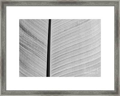 Natural Lines Framed Print by Sabrina L Ryan