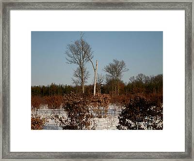 Naturally Eye Catching Framed Print by Erica  Darknell