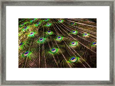 Nature Abstracts Framed Print by Karen Wiles