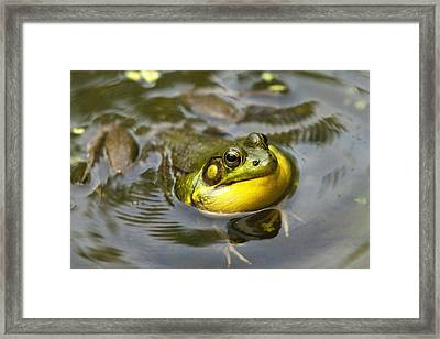 Nature Calling Framed Print by Christina Rollo