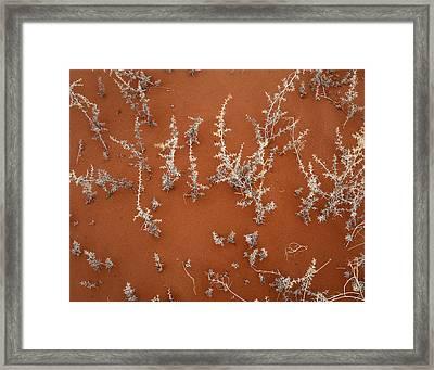 Nature Endures Framed Print by Diane Bohna
