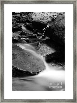 Nature Framed Print by James Taylor