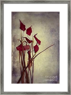 Nature Morte Du Moment  01 - Pr03 Framed Print by Variance Collections