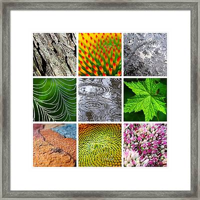 Nature Patterns And Textures Square Collage Framed Print by Christina Rollo