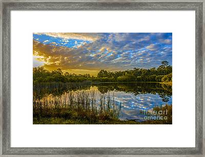 Nature Untouched Framed Print by Amanda Sinco